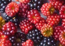 <strong>Antonio Castello Avilleira</strong> Berries